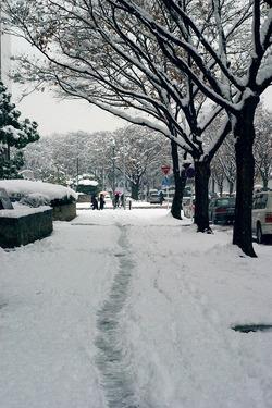 snow45_R